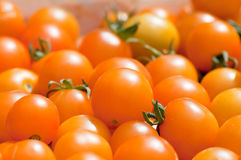 Harvested yellow tomatoes. Closeup of heap of harvested yellow ripened tomatoes Royalty Free Stock Photography