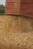 Harvester in Action. Combine harvester in action on wheat field Stock Photos