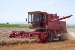 Harvester in Action. Farmer doing his work in combine harvester on wheat field Royalty Free Stock Photography