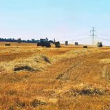 Harvester agriculture machine harvesting golden ripe corn field. Tractor - hay and straw,  traditional summer background with an i Royalty Free Stock Images