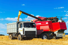 The harvester is bulk harvested grain Royalty Free Stock Images