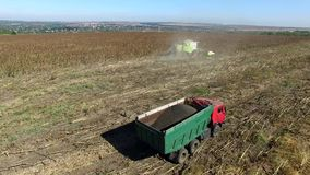 Harvester Collects Sunflowers. Aerial Survey stock video