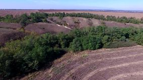 Harvester Collects Sunflowers. Aerial Survey stock video footage