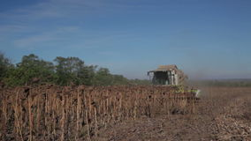 Harvester Collects Sunflowers stock video