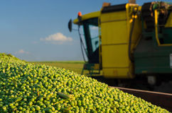 Harvester combine and green peas in the tractor trailer Royalty Free Stock Photography