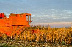 Harvester combine harvesting corn on sunny summer day Royalty Free Stock Image