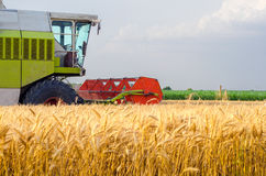 Harvester combine harvesting wheat on agricultural field. On cloudy summer day Stock Photo