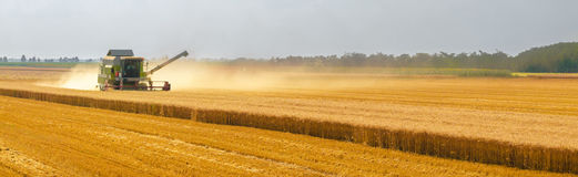 Harvester combine harvesting wheat on agricultural field. On sunny summer day Stock Image