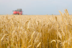 Harvester combine harvesting wheat on agricultural summer field. Harvester combine harvesting wheat on agricultural field on cloudy summer day Royalty Free Stock Images
