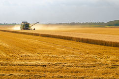 Harvester combine harvesting wheat on agricultural summer field Royalty Free Stock Photo