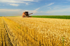 Harvester combine harvesting wheat on agricultural summer field Royalty Free Stock Photos