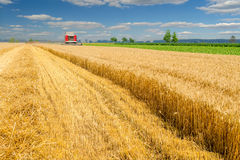 Harvester combine harvesting wheat on agricultural summer field. Harvester combine harvesting wheat on agricultural field on sunny summer day Royalty Free Stock Photography