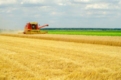 Harvester combine harvesting wheat Stock Images