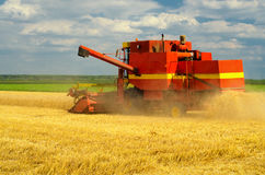 Harvester combine harvesting wheat Royalty Free Stock Photography