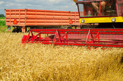 Harvester combine harvesting wheat on cloudy summer day Royalty Free Stock Photos