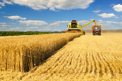 Harvester combine harvesting wheat pouring it in tractor trailer Royalty Free Stock Image