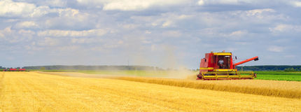 Harvester combine harvesting wheat in summer Stock Photos