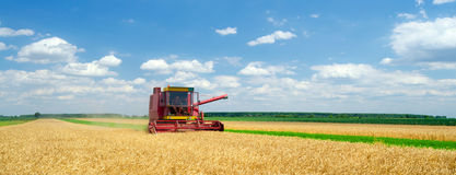 Harvester combine harvesting wheat in summer Royalty Free Stock Images
