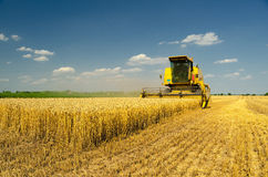Harvester combine harvesting wheat Stock Photos