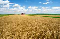 Harvester combine harvesting wheat on sunny summer day Royalty Free Stock Photography