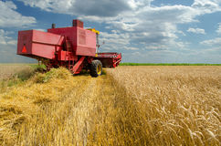 Harvester combine harvesting wheat on sunny summer day Royalty Free Stock Photos