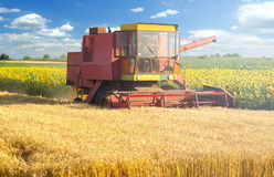 Harvester combine harvesting wheat on sunny summer day stock images