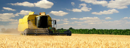 Harvester combine harvesting wheat on sunny summer day.  Stock Photos