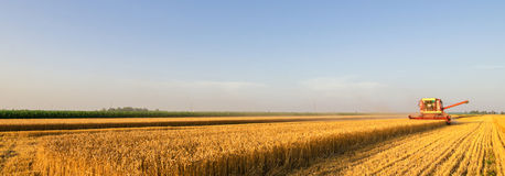 Harvester combine harvesting wheat on sunny summer day royalty free stock image