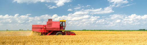 Harvester combine harvesting wheat on sunny summer day.  Stock Image