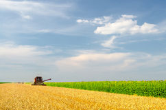 Harvester combine harvesting wheat on sunny summer day. Tractor in the background Stock Photo