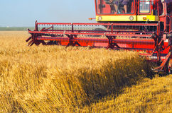 Harvester combine harvesting wheat on sunny summer day. Harvester combine harvesting wheat on warm sunny summer day Royalty Free Stock Photography