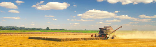 Harvester combine harvesting wheat on suny summer day.  Stock Photo