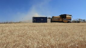 Harvester combine thrash wheat field stock video footage