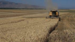 Harvester combine thrash wheat field stock footage