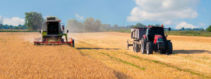 Harvester combine and tractor harvesting wheat on sunny summer d stock photo