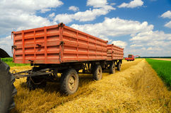 Harvester combine and tractor trailers during wheat harvest Royalty Free Stock Image