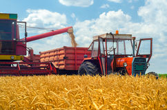 Harvester combine, tractor and trailers during wheat harvest Royalty Free Stock Image