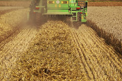Harvester in corn fields Stock Images