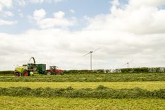 Harvester cutting field, loading Silage into a Tractor Trailer Stock Photos