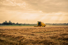 Harvester on a field in the summertime Stock Images