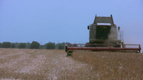 Harvester gathers the wheat stock video footage
