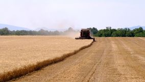 Harvester gathers the wheat crop stock video