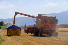 Harvester gathers the wheat crop Stock Photo