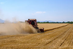 Harvester gathers the wheat crop Royalty Free Stock Images