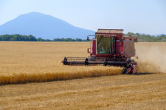 Harvester gathers the wheat crop Stock Photography