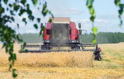 Harvesting in the field. Harvester harvesting ripe rye in the field Stock Photography