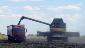 Harvester for harvesting sunflower crop Royalty Free Stock Image
