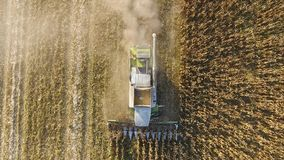Harvester harvests corn. Collect corn cobs with the help of a combine harvester. Ripe corn on the field. Stock Image