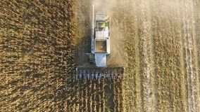 Harvester harvests corn. Collect corn cobs with the help of a co Royalty Free Stock Photo