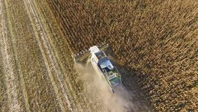 Harvester harvests corn. Collect corn cobs with the help of a combine harvester. Ripe corn on the field. Royalty Free Stock Photography